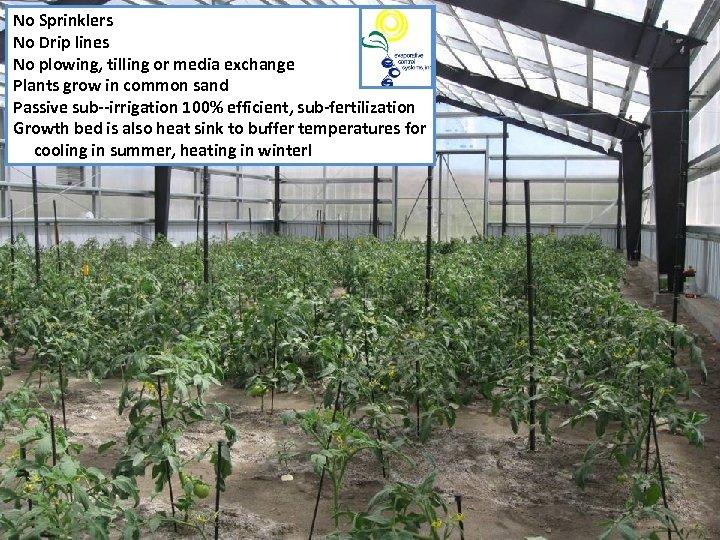 No Sprinklers No Drip lines No plowing, tilling or media exchange Plants grow in