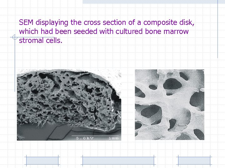 SEM displaying the cross section of a composite disk, which had been seeded with