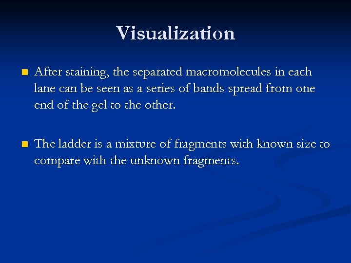 Visualization n After staining, the separated macromolecules in each lane can be seen as