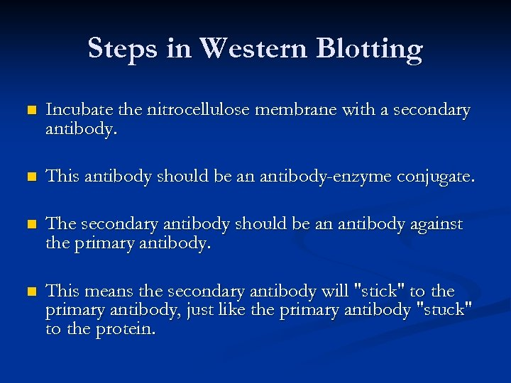 Steps in Western Blotting n Incubate the nitrocellulose membrane with a secondary antibody. n