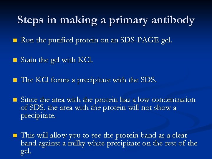 Steps in making a primary antibody n Run the purified protein on an SDS-PAGE