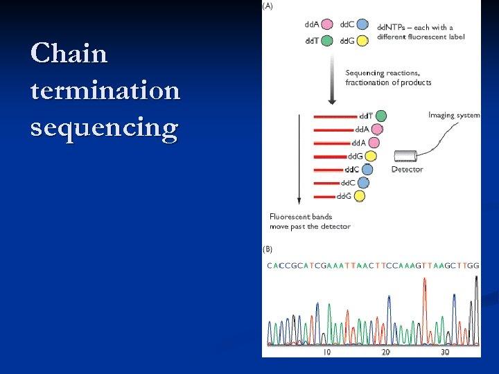 Chain termination sequencing