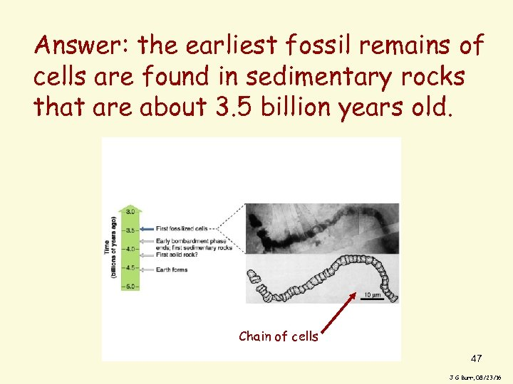 Answer: the earliest fossil remains of cells are found in sedimentary rocks that are
