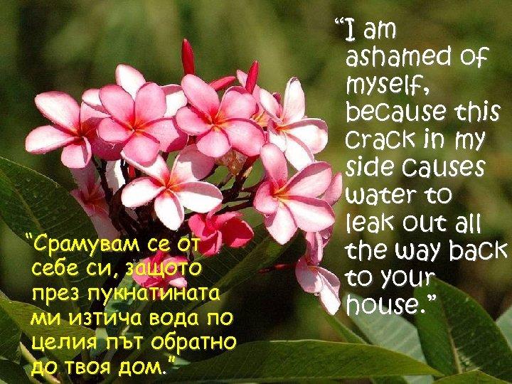"""""""Срамувам се от себе си, защото през пукнатината ми изтича вода по целия път"""