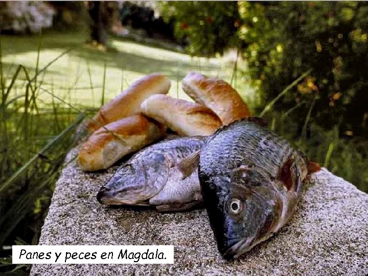 Panes y peces en Magdala.