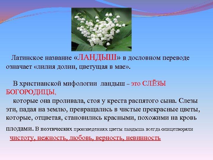 . Латинское название «ЛАНДЫШ» в дословном переводе означает «лилия долин, цветущая в мае»