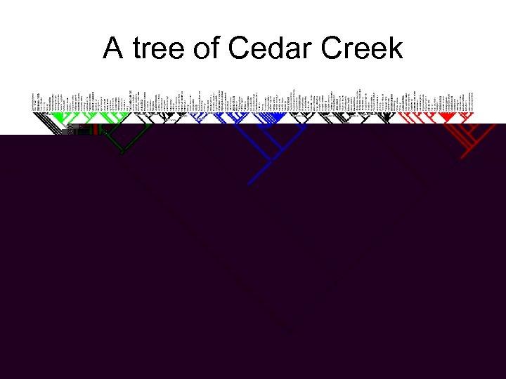 A tree of Cedar Creek Poaceae Asteraceae Eurosid 1