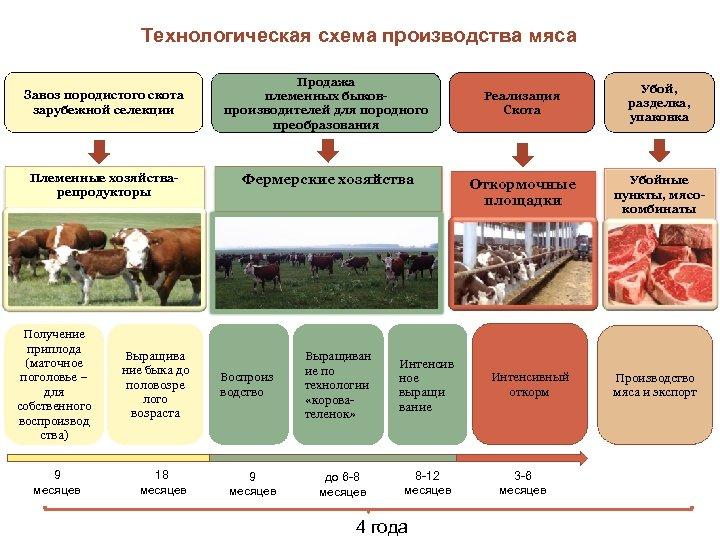 Технологическая схема производства мяса Завоз породистого скота зарубежной селекции Продажа племенных быковпроизводителей для породного