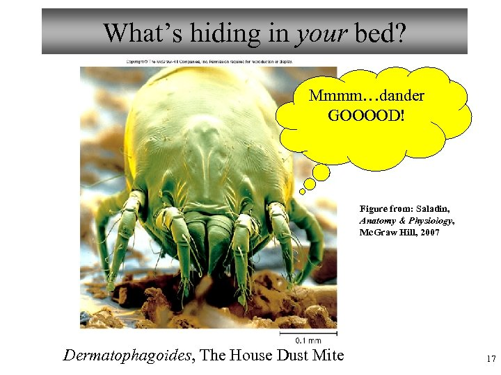 What's hiding in your bed? Mmmm…dander GOOOOD! Figure from: Saladin, Anatomy & Physiology, Mc.