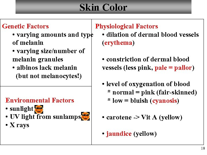Skin Color Genetic Factors Physiological Factors • varying amounts and type • dilation of