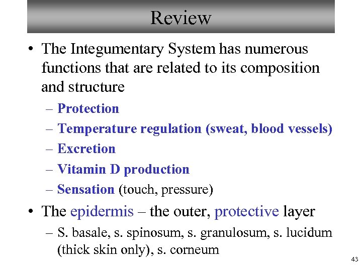 Review • The Integumentary System has numerous functions that are related to its composition