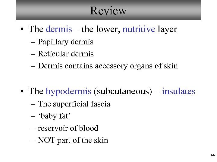 Review • The dermis – the lower, nutritive layer – Papillary dermis – Reticular
