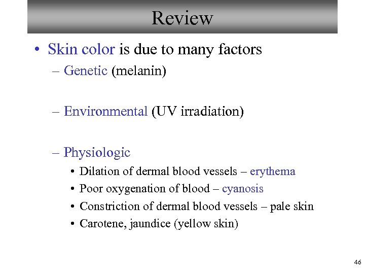 Review • Skin color is due to many factors – Genetic (melanin) – Environmental