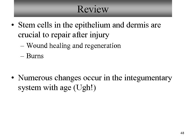 Review • Stem cells in the epithelium and dermis are crucial to repair after