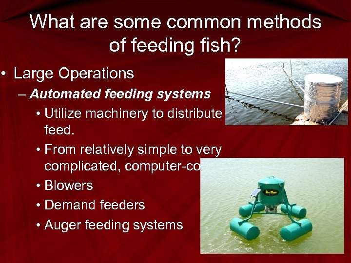 What are some common methods of feeding fish? • Large Operations – Automated feeding