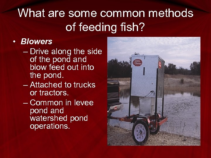 What are some common methods of feeding fish? • Blowers – Drive along the