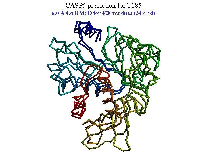CASP 5 prediction for T 185 6. 0 Å Cα RMSD for 428 residues
