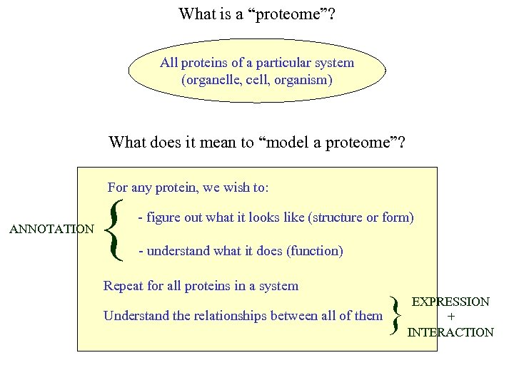 """What is a """"proteome""""? All proteins of a particular system (organelle, cell, organism) What"""
