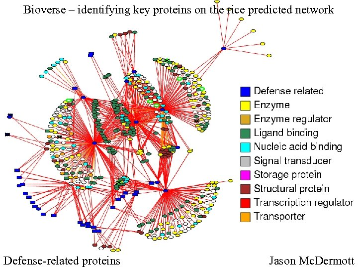 Bioverse – identifying key proteins on the rice predicted network Defense-related proteins Jason Mc.