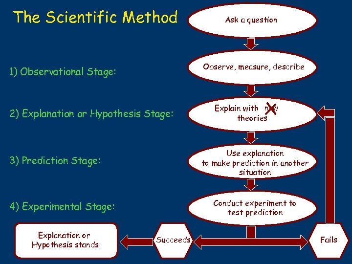 The Scientific Method Observe, measure, describe 1) Observational Stage: 2) Explanation or Hypothesis Stage: