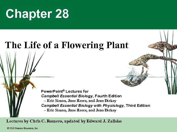 Chapter 28 The Life of a Flowering Plant Power. Point® Lectures for Campbell Essential