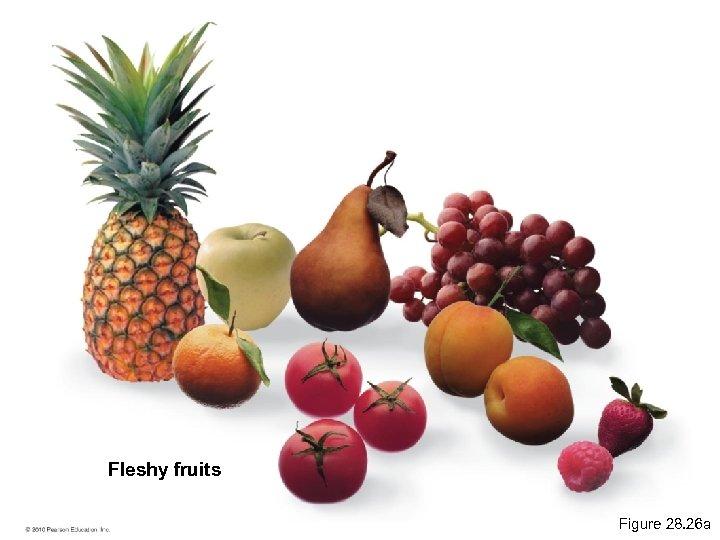 Fleshy fruits Figure 28. 26 a