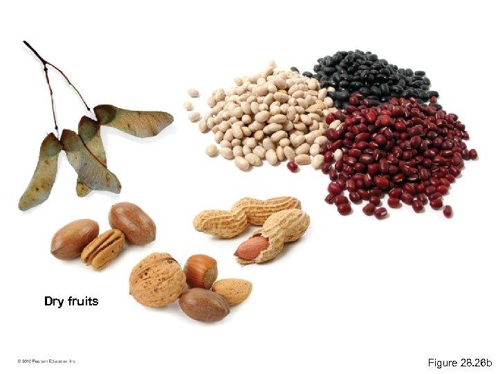 Dry fruits Figure 28. 26 b