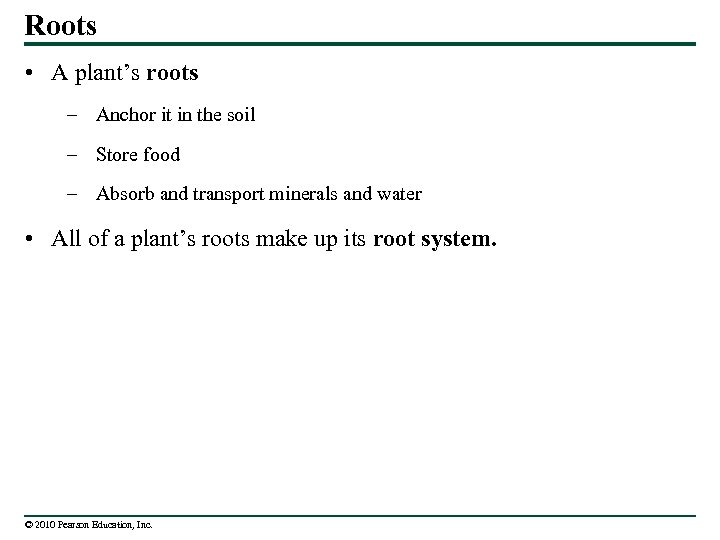 Roots • A plant's roots – Anchor it in the soil – Store food