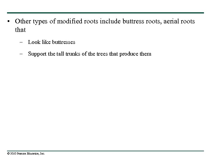 • Other types of modified roots include buttress roots, aerial roots that –
