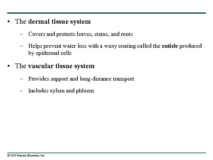 • The dermal tissue system – Covers and protects leaves, stems, and roots