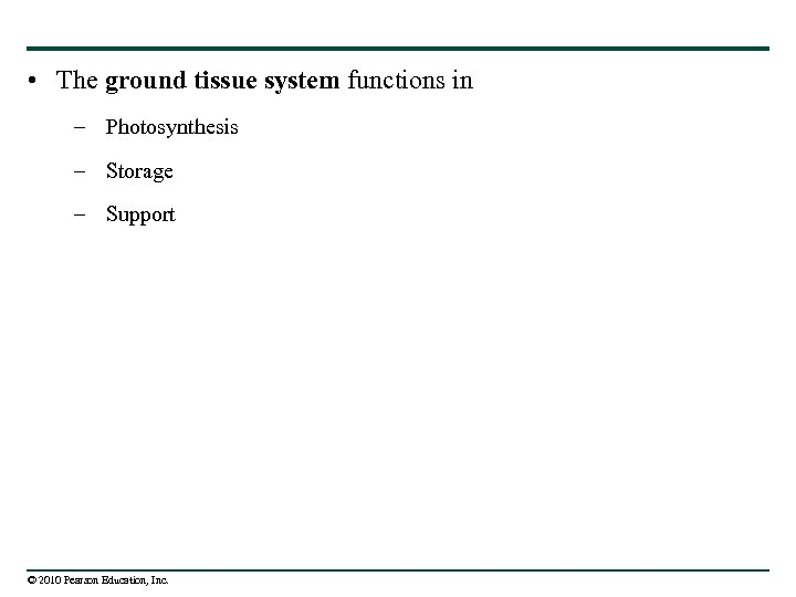 • The ground tissue system functions in – Photosynthesis – Storage – Support