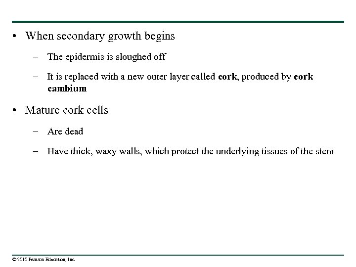 • When secondary growth begins – The epidermis is sloughed off – It