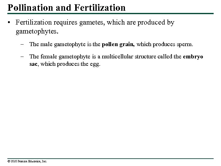 Pollination and Fertilization • Fertilization requires gametes, which are produced by gametophytes. – The