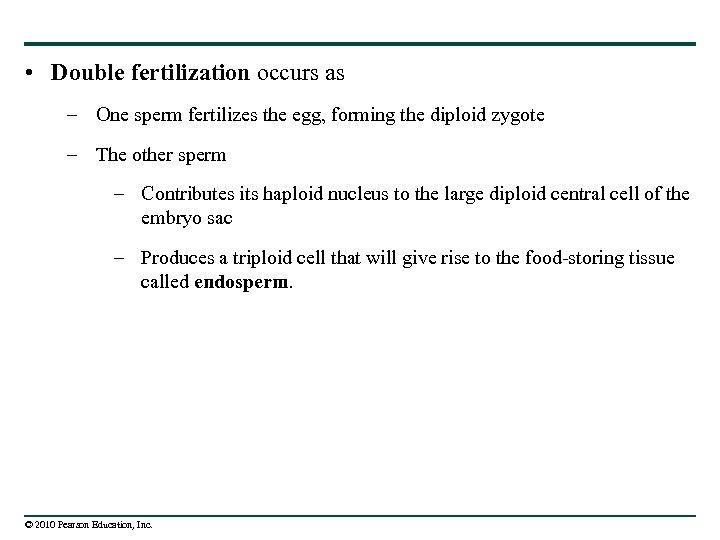 • Double fertilization occurs as – One sperm fertilizes the egg, forming the