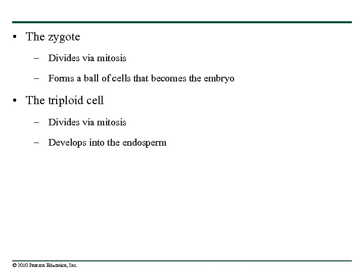 • The zygote – Divides via mitosis – Forms a ball of cells