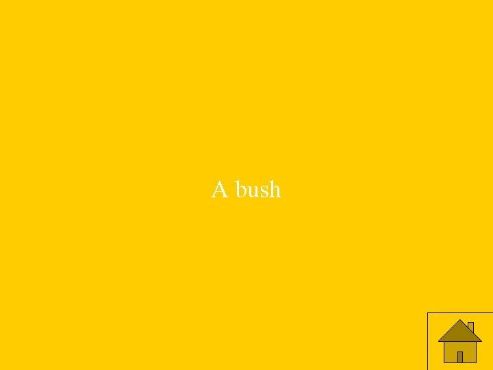 A bush