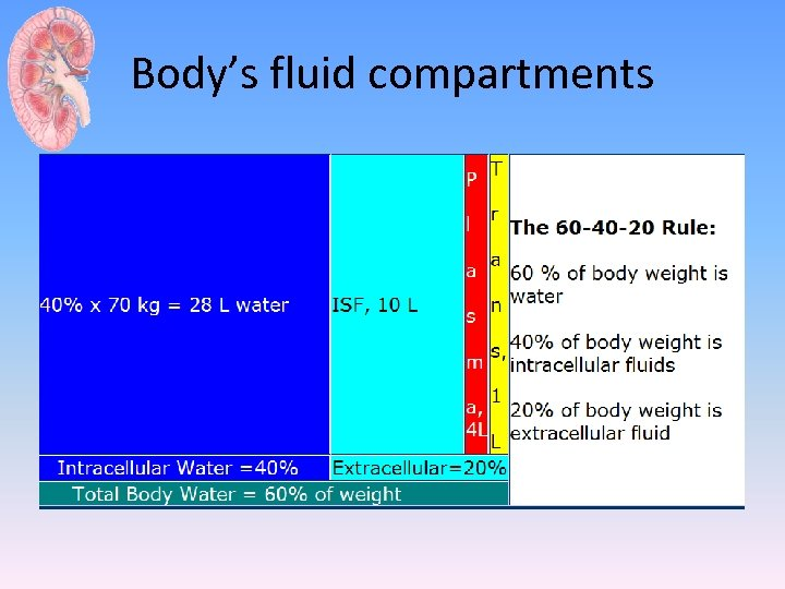 Body's fluid compartments