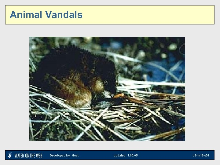Animal Vandals Developed by: Host Updated: 1. 05 U 3 -m 12 -s 31