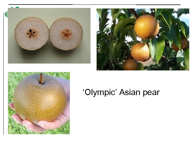 'Olympic' Asian pear