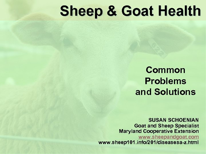 Sheep & Goat Health Common Problems and Solutions SUSAN SCHOENIAN Goat and Sheep Specialist