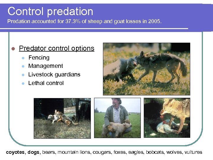 Control predation Predation accounted for 37. 3% of sheep and goat losses in 2005.