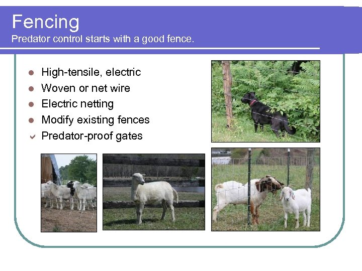 Fencing Predator control starts with a good fence. High-tensile, electric l Woven or net