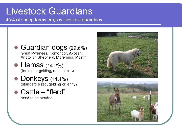 Livestock Guardians 45% of sheep farms employ livestock guardians. l Guardian dogs (29. 6%)