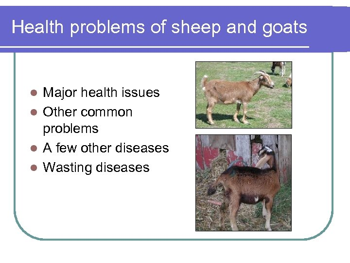 Health problems of sheep and goats Major health issues l Other common problems l