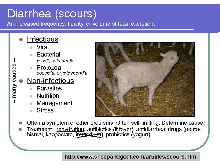 Diarrhea (scours) An increased frequency, fluidity, or volume of fecal excretion. l Infectious l