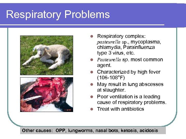 Respiratory Problems l l l Respiratory complex: pasteurella sp. , mycoplasma, chlamydia, Parainfluenza type