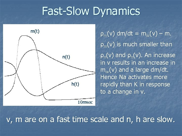 Fast-Slow Dynamics m(t) ρm(v) dm/dt = m∞(v) – m. ρm(v) is much smaller than