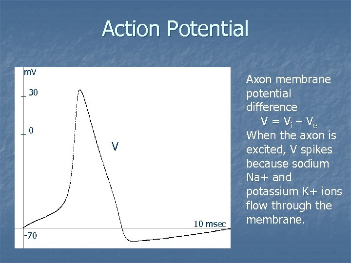 Action Potential m. V _ 30 _0 V 10 msec -70 Axon membrane potential