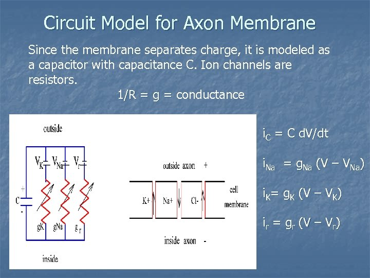 Circuit Model for Axon Membrane Since the membrane separates charge, it is modeled as