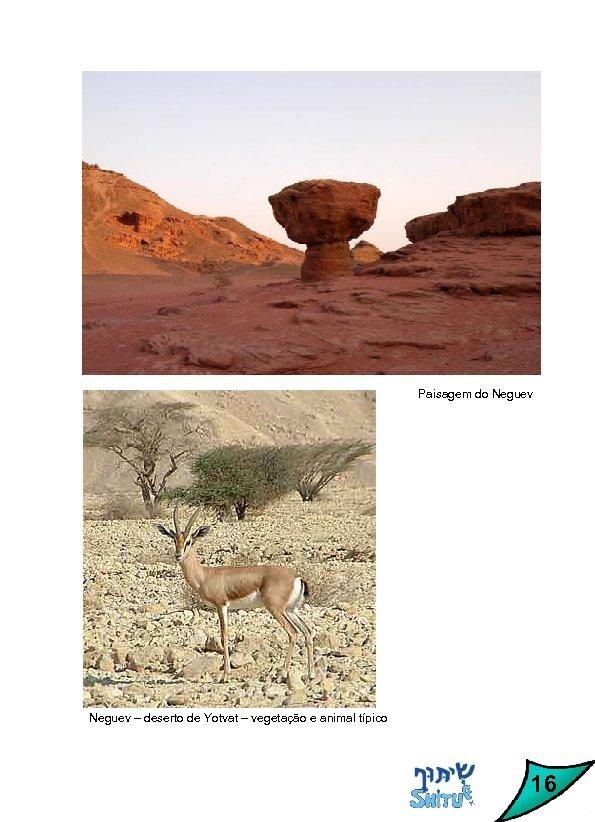Paisagem do Neguev – deserto de Yotvat – vegetação e animal típico 16